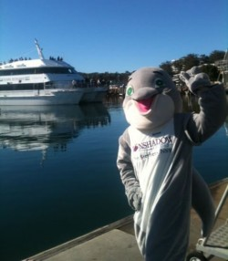 WHALE WATCHING CRUISES, DOLPHIN WATCHING, NELSON BAY, PORT STEPHENS, NSW