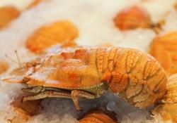 Pt Cartwright Seafood Market – Fresh Seafood Sunshine Coast