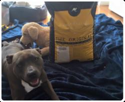 Aussie Dog Food