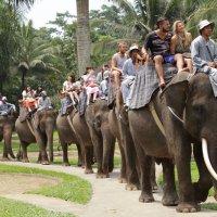 Celebrities – Elephant Riding