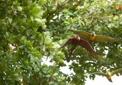 Dine & Shop | Bali Bird Park