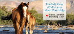 Donate – Salt River Wild Horse Management Group