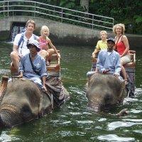 Elephant Safari – Celebrities