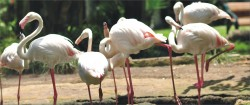 Exhibits | Bali Bird Park