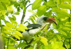 Exhibits   Bali Bird Park