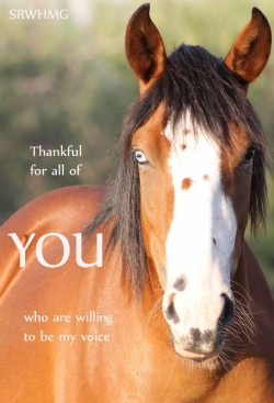 What You Can Do – Salt River Wild Horse Management Group