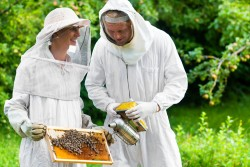 Bees – Surrey Docks Farm London