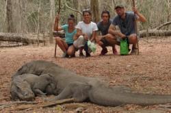 Komodo National Park in Komodo & Rinca Islands – Lonely Planet