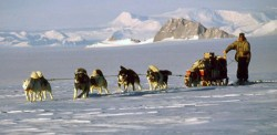 Dogs in Antarctica Pictures of Huskies – page 1