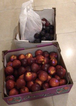 Nectarines , Plums and Peaches 🍑