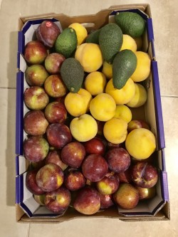 Fruits 🤤
