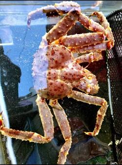 Snow crab 🦀