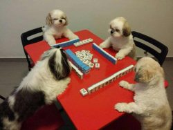 Dog year – Mahjong