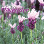 Flowers | About The Garden Magazine