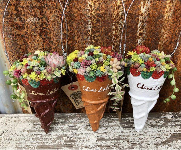 Beautiful succulent in cone