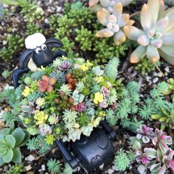 Lamy Surrounded by succulent