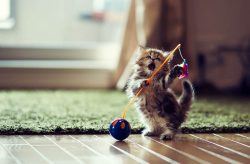 fighting kitten