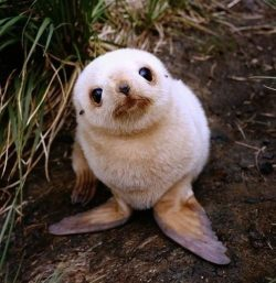 baby seal on land