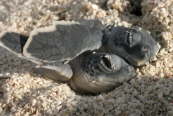baby turtles taking a nap