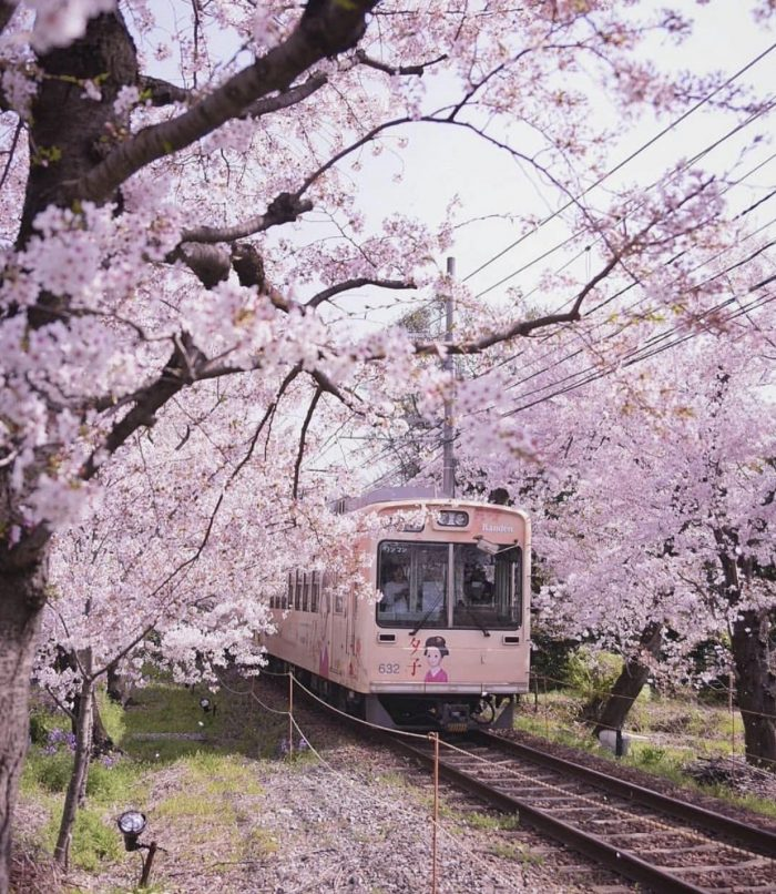 Kyoto, Japan – Sakura