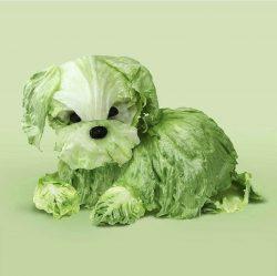 Lettuce Dog