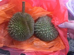 Everyone love Durian but not me 😬