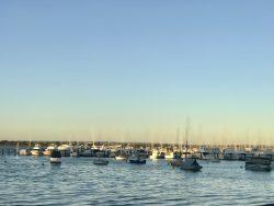 Matilda Bay Reserve 😘